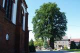 Pomniki Przyrody w Gminie Lyski